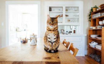 Кухня с котом