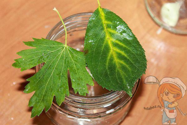Листья смородины и вишни на банке