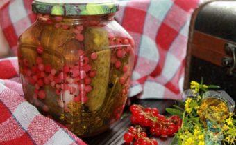 Огурцы с красной смородиной на зиму