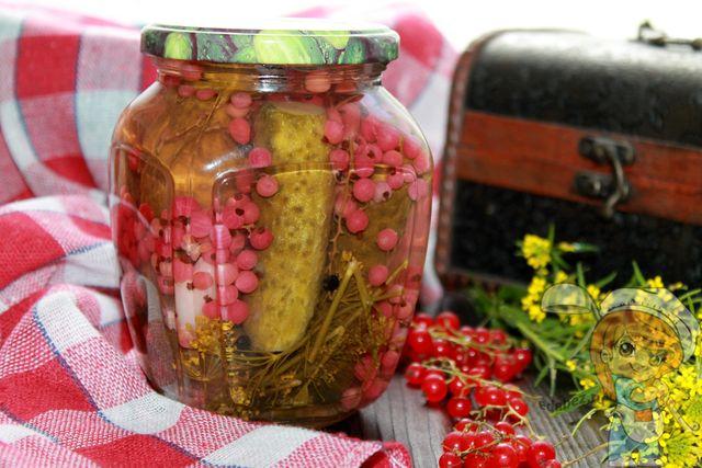 Огурцы с красной смородиной - посол на зиму