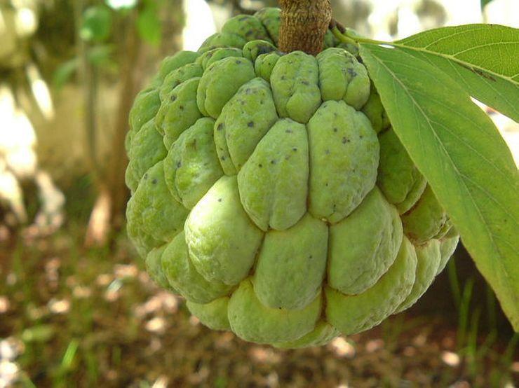 А этот фрукт съедобный?