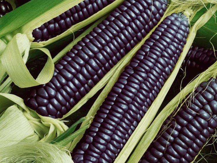 Что насчет такой кукурузы?